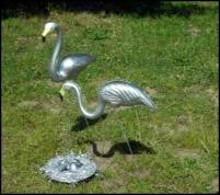 Our flamingos framed
