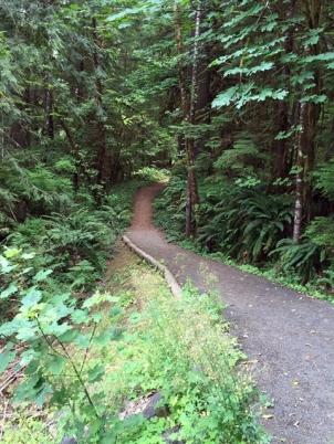 Trail to Susan Creek Falls